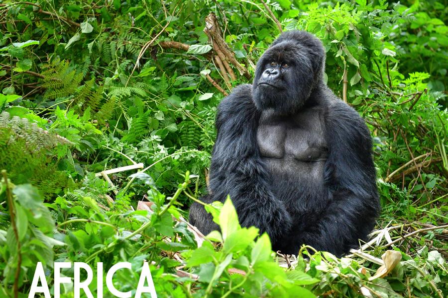 Catalogo Viaggi Africa NBTS Tour Operator