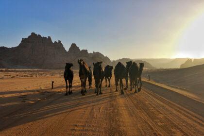 Arabia Saudita Alula Deserto
