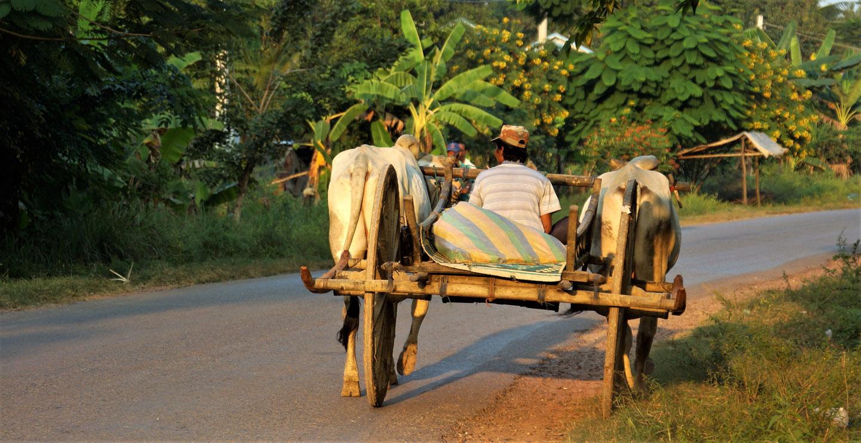 Cambogia, Battanbang vita rurale