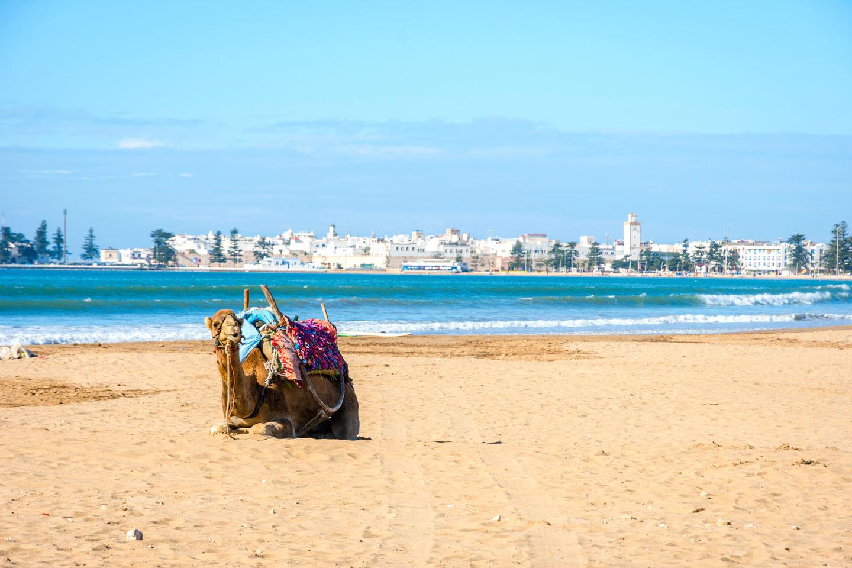 Marocco Essaouira Spiaggia Cammello