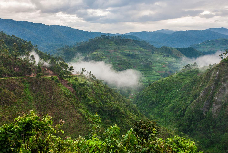 Impenetrabile Foresta Bwindi