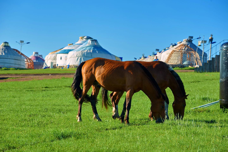 Mongolia Iurte Cavalli
