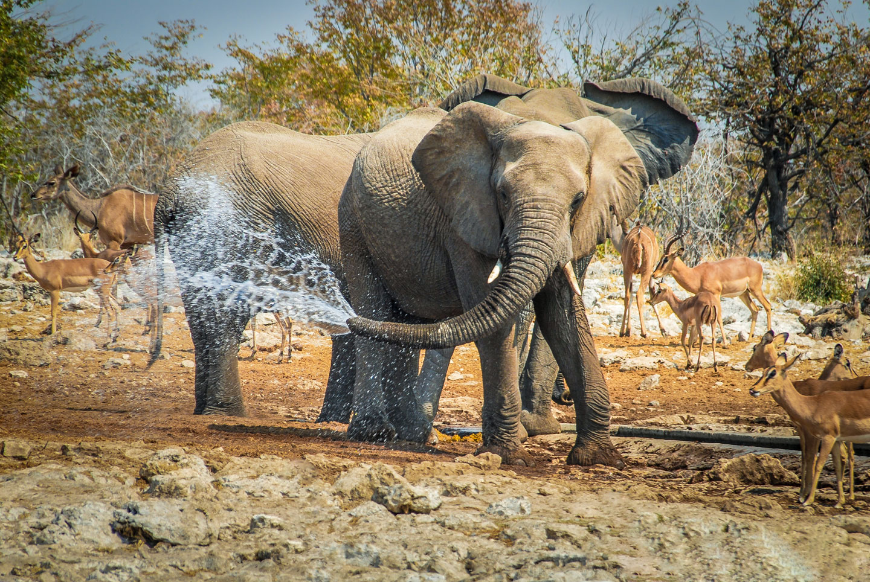 Namibia Etosha Parco Nazionale