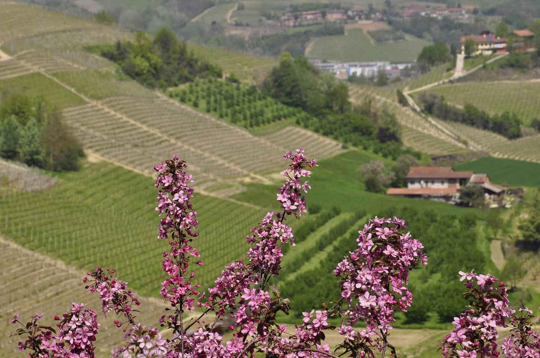 Langhe Piemonte Territorio vitivinicolo