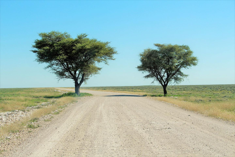 Etosha Parco Nazionale Namibia